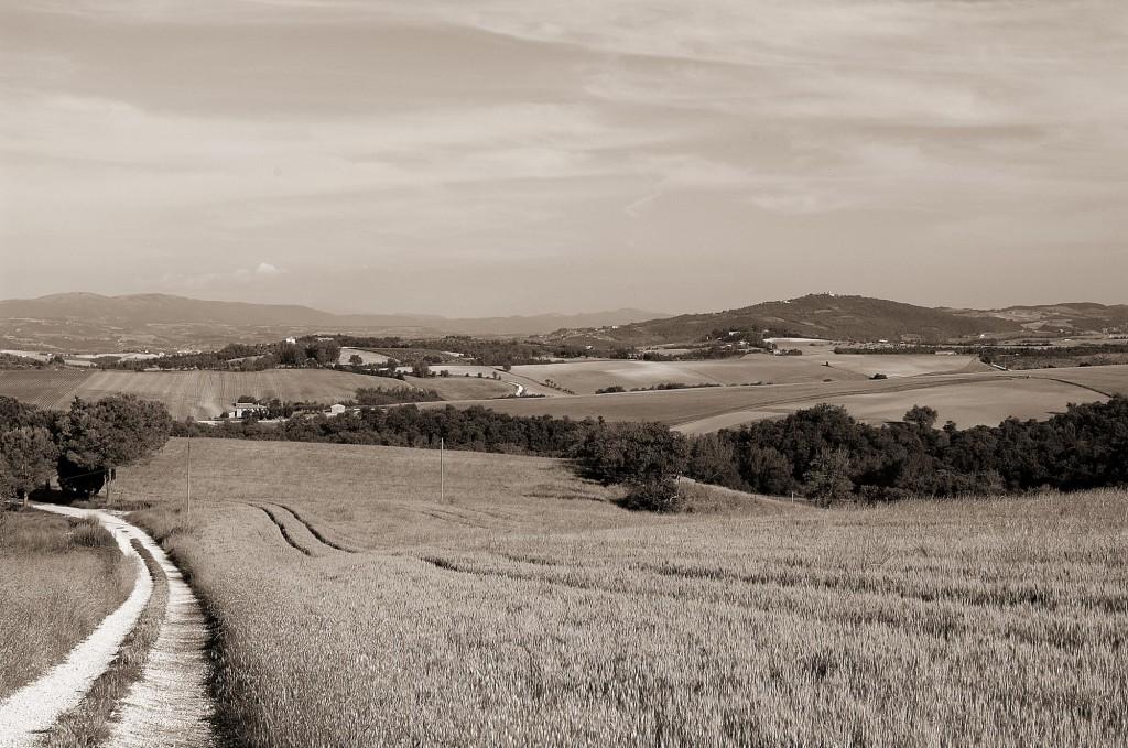 azienda_agraria_montevibiano